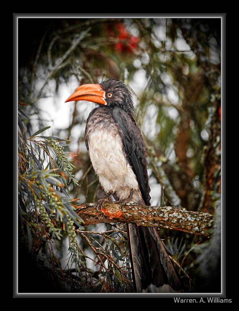 Hornbill Best Front by Warren. A. Williams