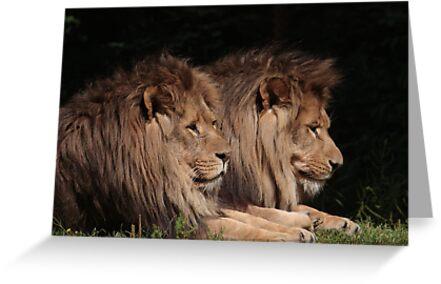 Lions In The U.K. by Jackvol
