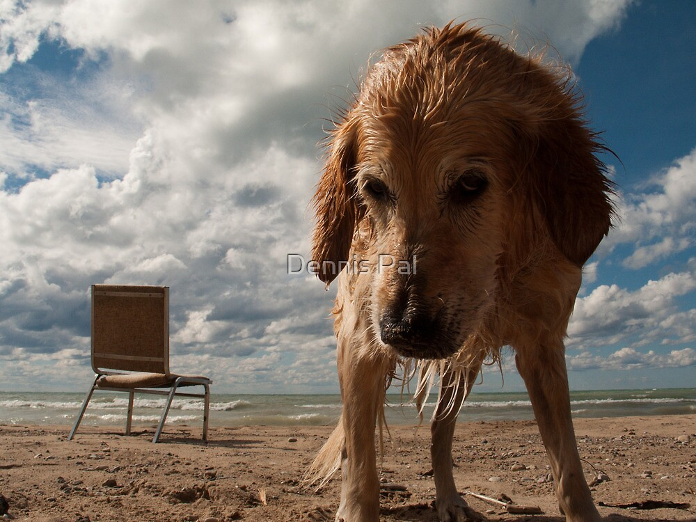 Dog Sky Beach Chair by Dennis Pal