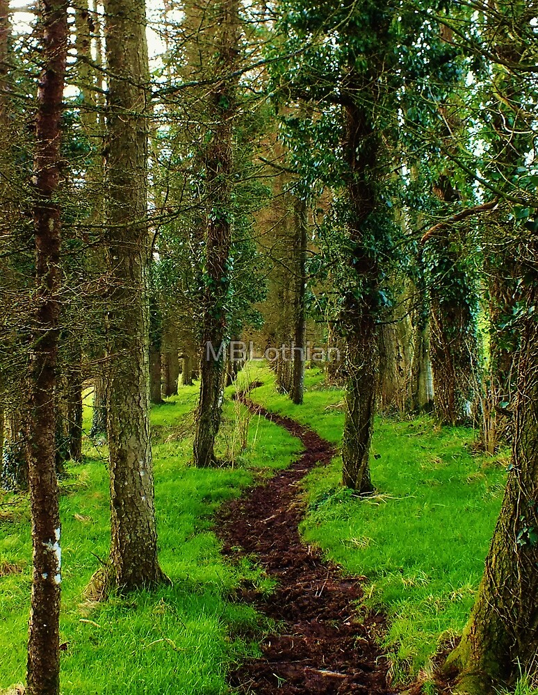 Forrest walk by MBLothian