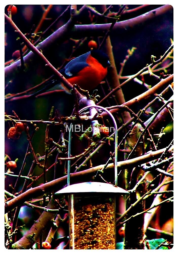 Little red bird by MBLothian
