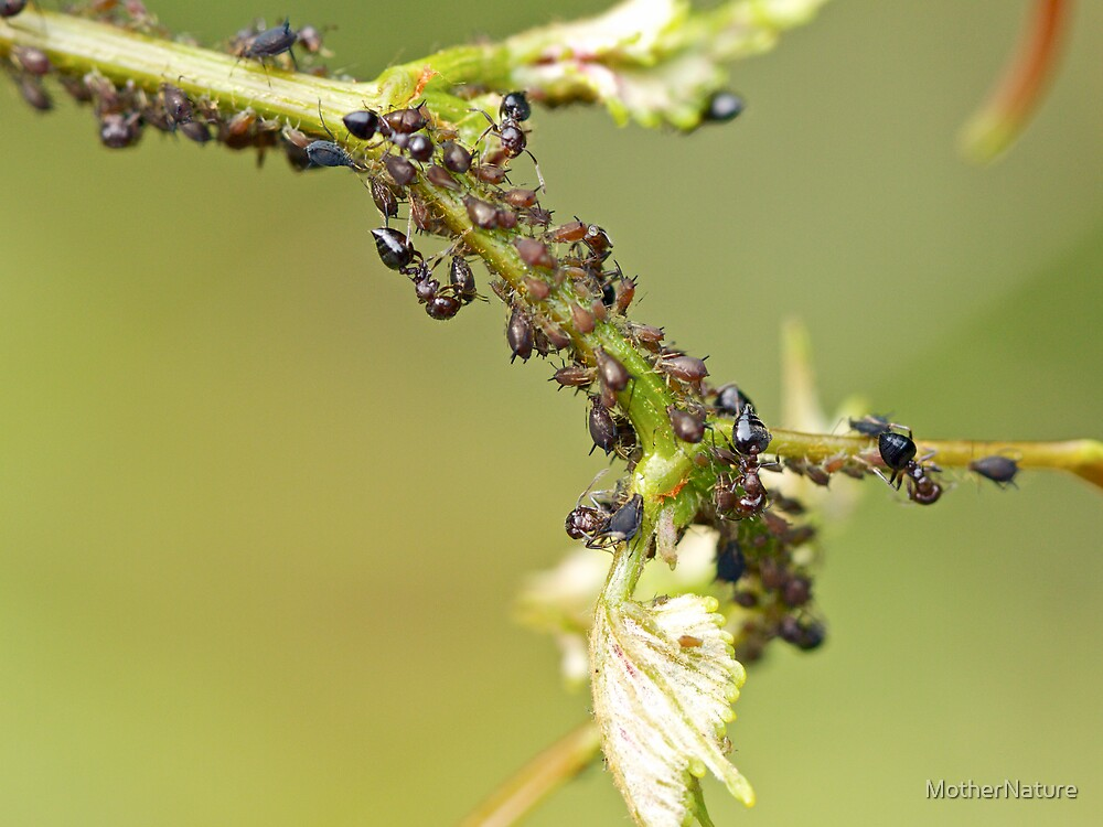Ant Farm by MotherNature