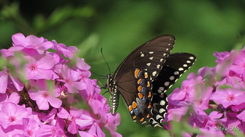 Summer ,Beautiful Butterfly by debraroffo