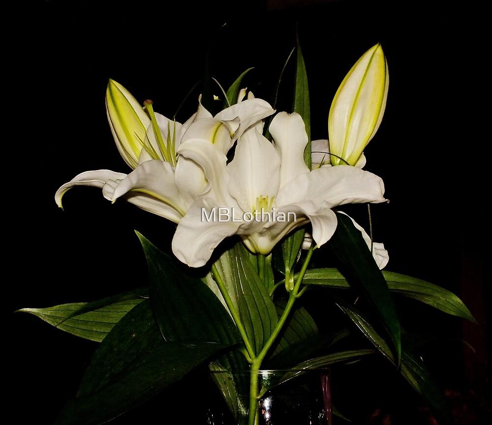 Flower by MBLothian