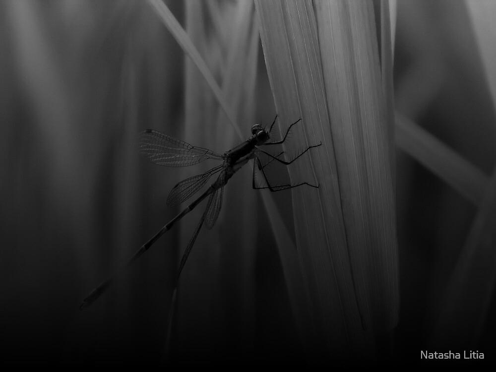 Dragonfly-  British Columbia Canada by Natasha Litia