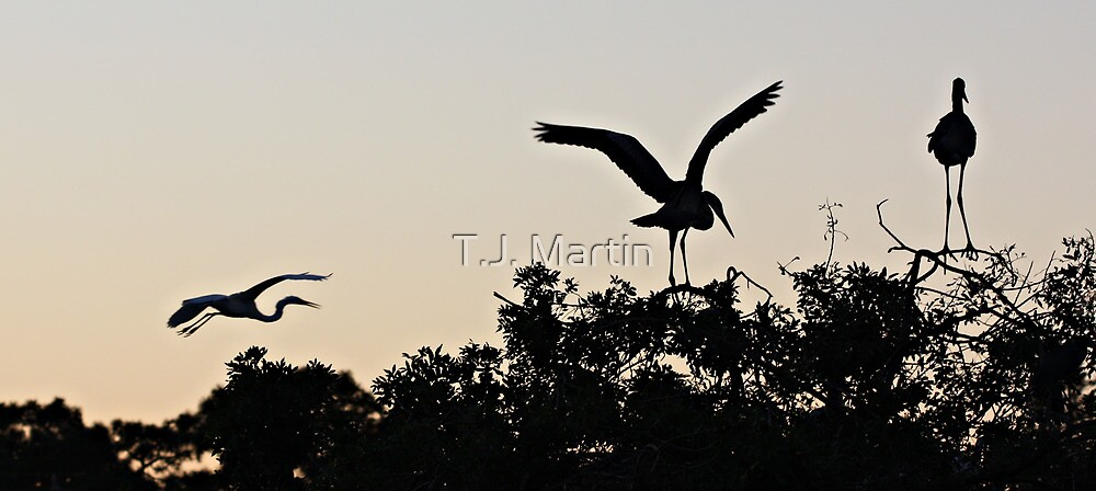 The Rookery -- Dusk by T.J. Martin