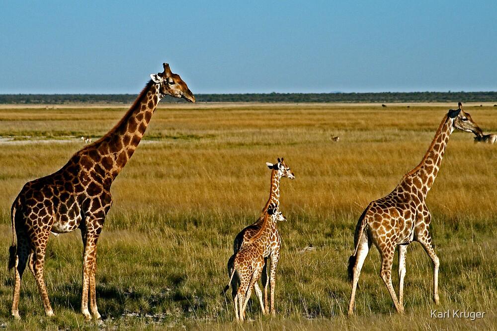 Grazing Giraffe by Karl Kruger