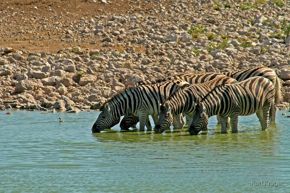 Thirsty Herd by Karl Kruger