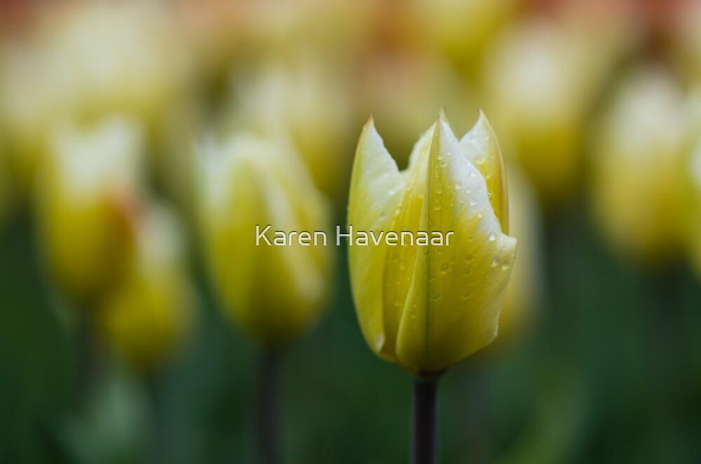 Yellowgreenish by Karen Havenaar