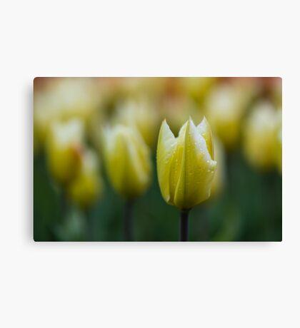 Yellowgreenish Canvas Print