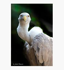 Griffon Vulture....[FEATURED] Photographic Print