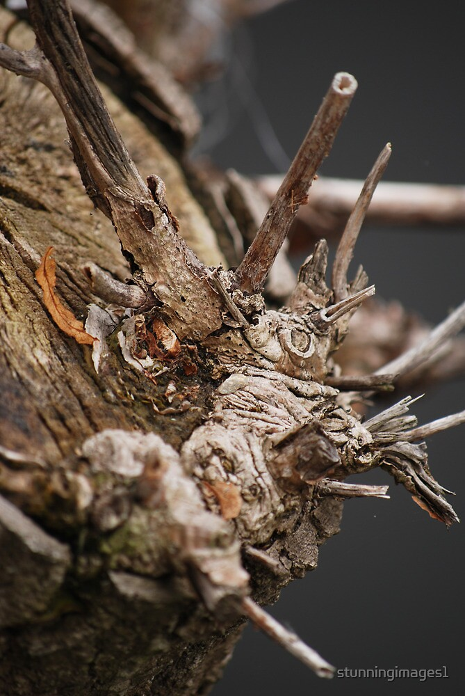 Hidden Creatures by stunningimages1