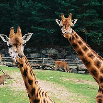 Giraffe by EmilyRose2205