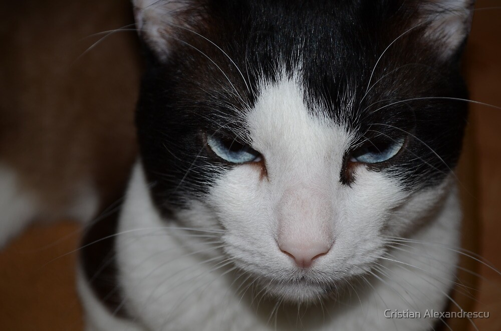 Cat by Cristian Alexandrescu