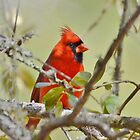 All Dressed In Red by Kathy Baccari
