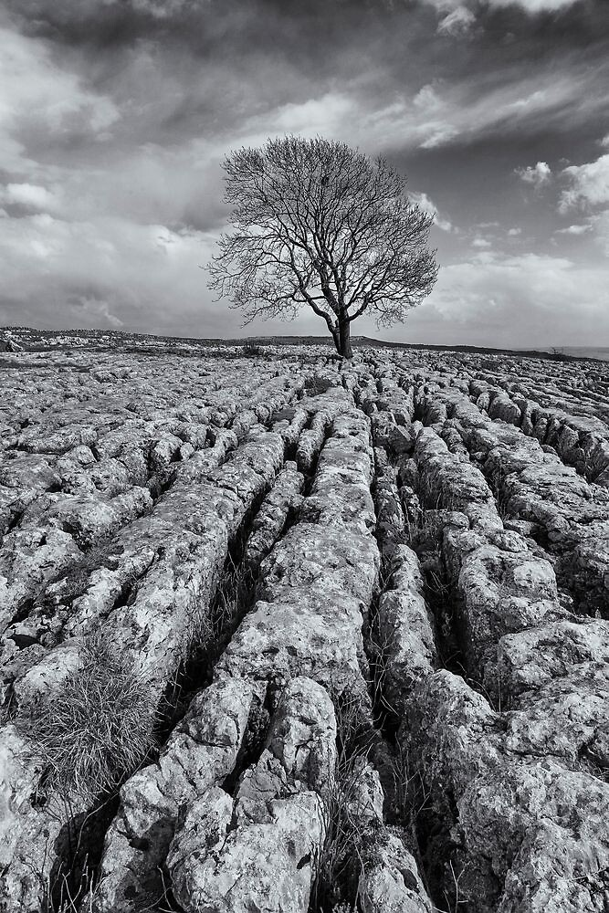 The Tree by MikeBarber