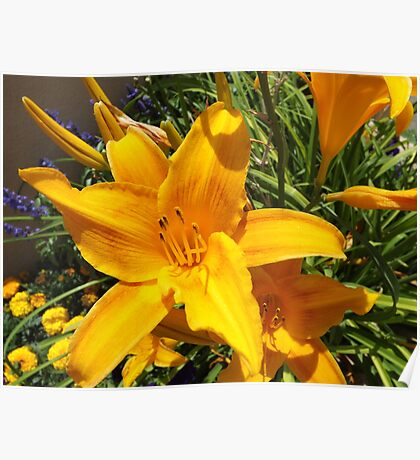Flower Close-up, Santa Fe, New Mexico Poster