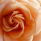 Peach Rose - 4:5 by Janelle Wourms