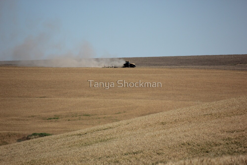 Farm Country by Tanya Shockman
