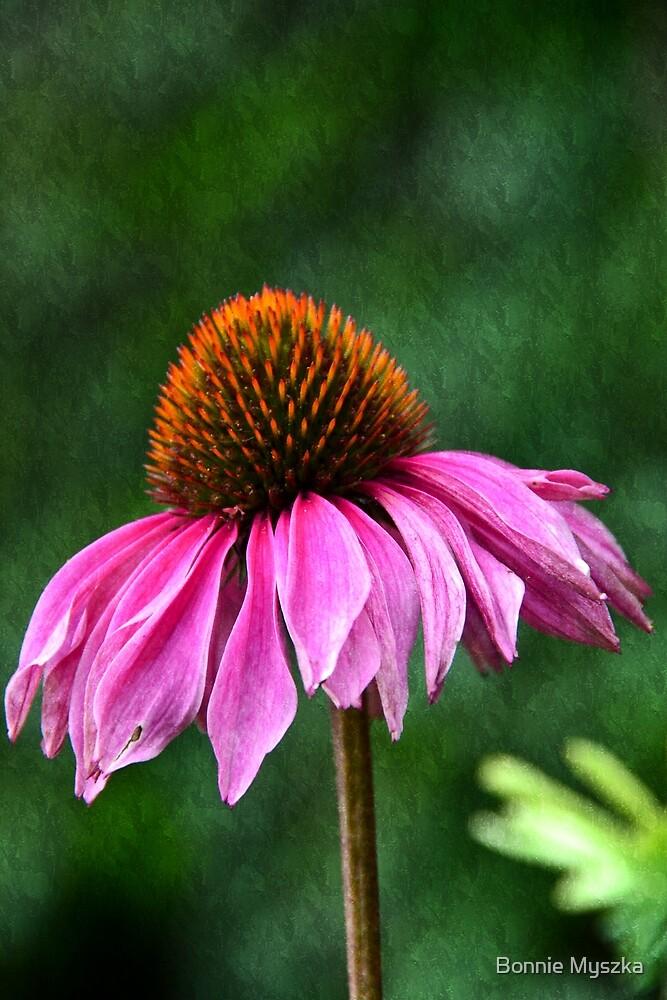 Pink Flower by Bonnie Myszka