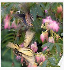 Tanz der Schmetterlinge Poster