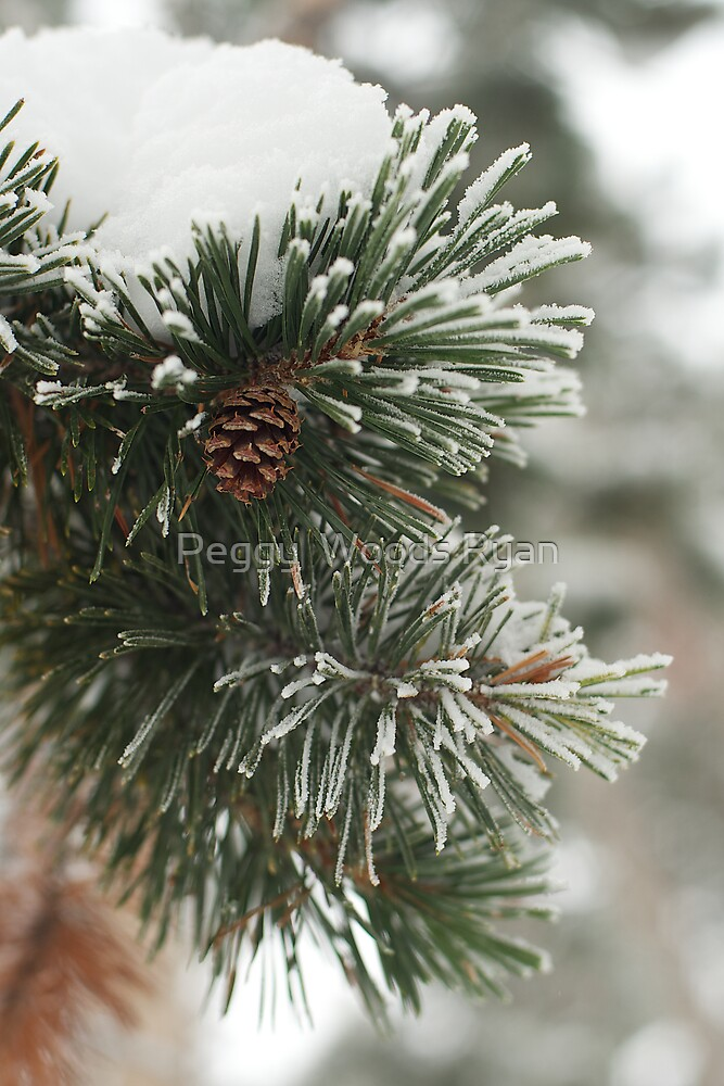 Pine Tree and Cone in Winter by Peggy  Woods Ryan