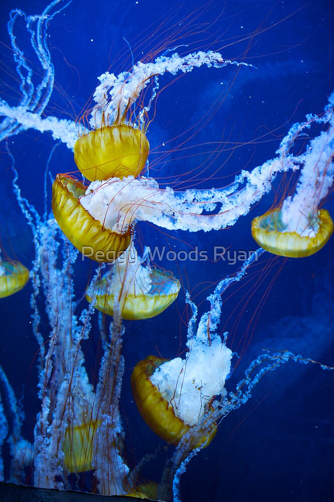 Jellies by Peggy  Woods Ryan