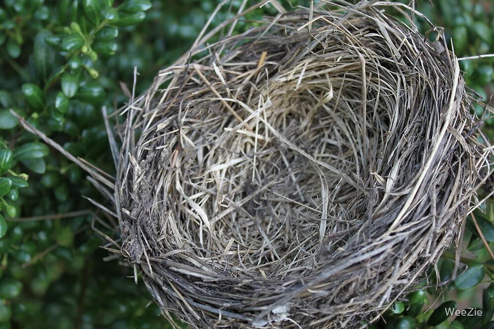Little Bird Nest by WeeZie