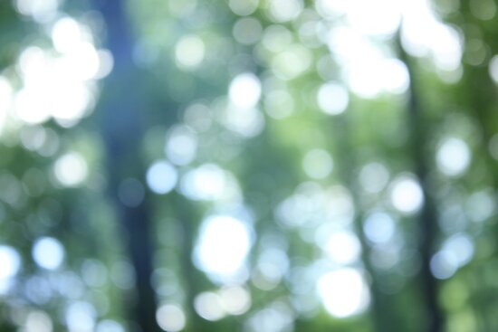 Calm Forest Light by KatieIridescent
