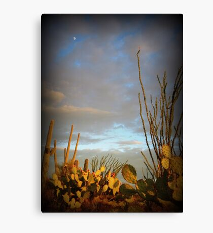 Cacti at Sunset Canvas Print