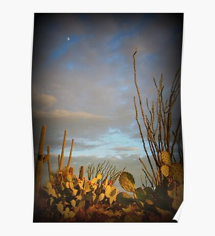Cacti at Sunset Poster
