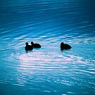 fwee wittle ducks by evvy84