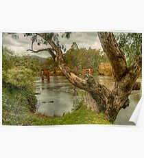 River Bend  Upper Murray - Jingelic NSW - The HDR Experience Poster