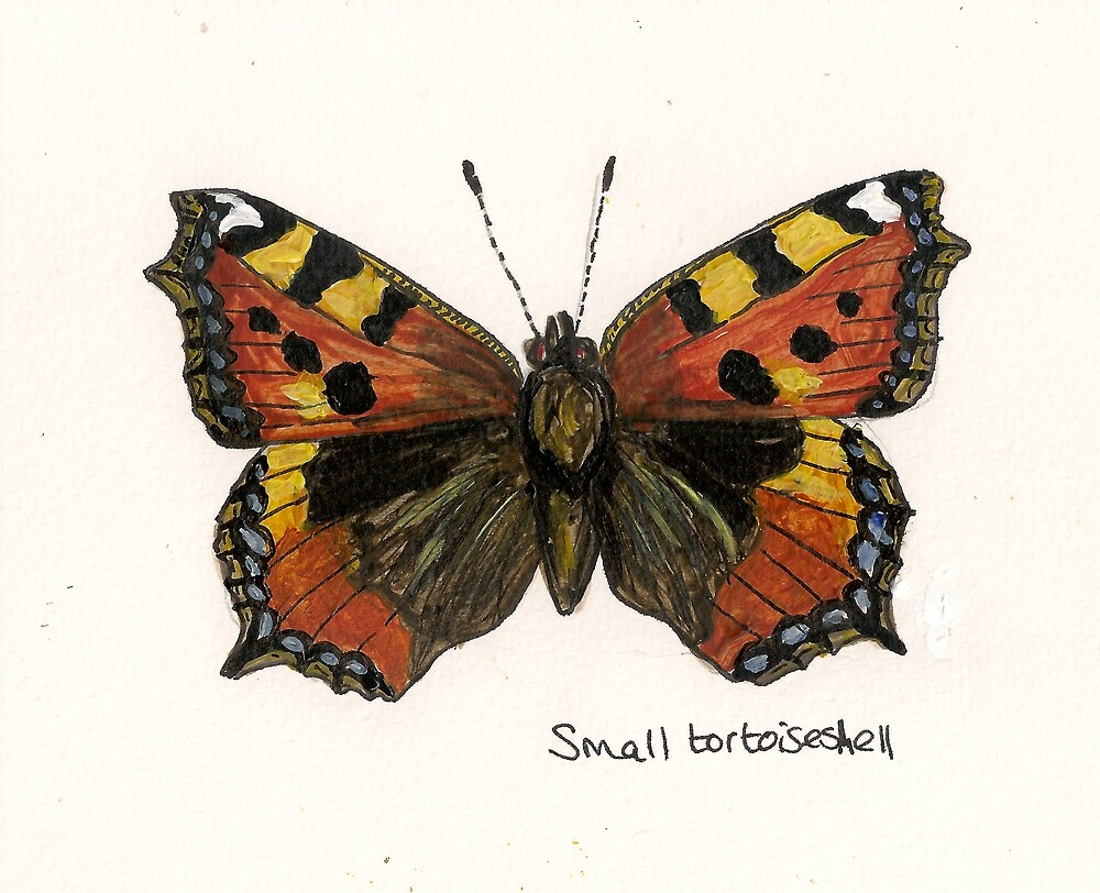 Small tortoiseshell by Sam Burchell