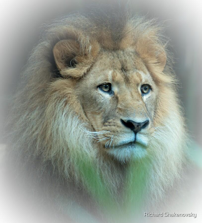 Lion Portrait by Richard Shakenovsky