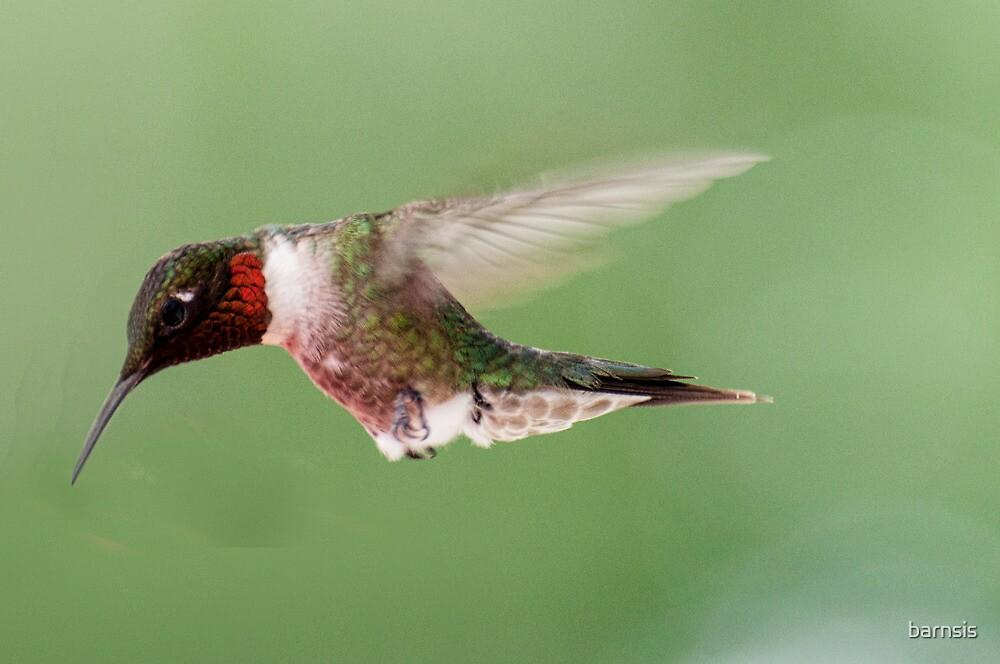 Male Ruby Throated Hummingbird ~ Please read description by barnsis
