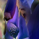 Blue Bells by Anivad - Davina Nicholas