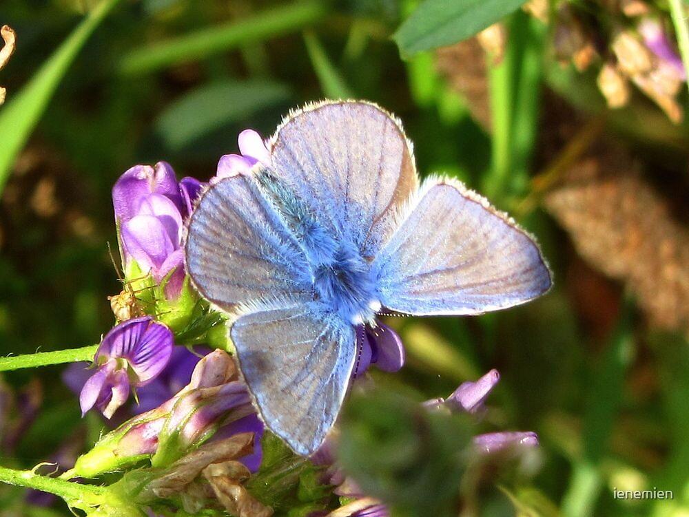 Beautiful Little Blue by ienemien