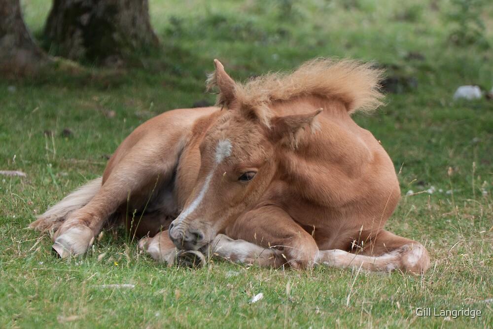 Sleepy Foal by Gill Langridge