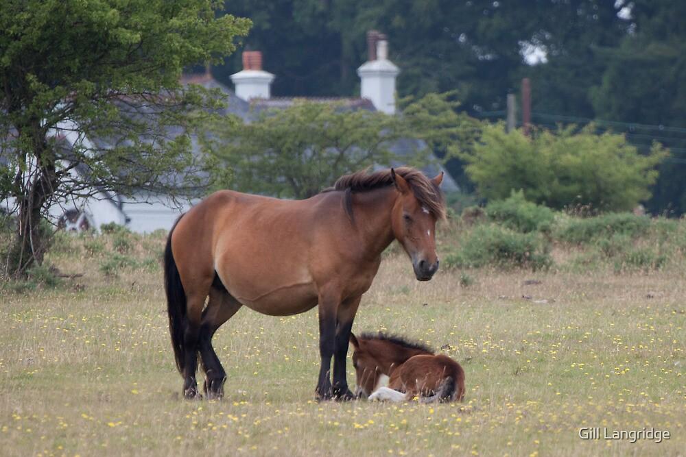 Dartmoor Pony and Foal by Gill Langridge
