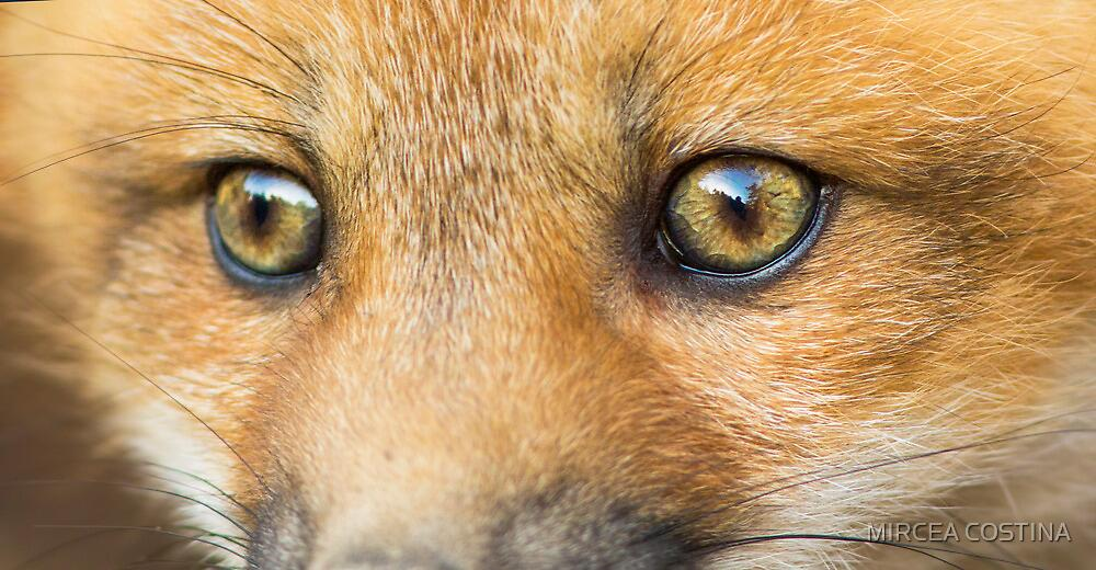 Wild eyes by MIRCEA COSTINA