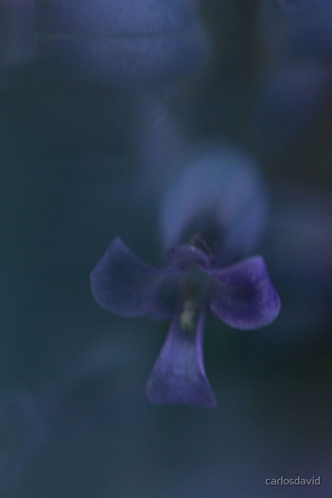 Flower Power 01 by carlosdavid