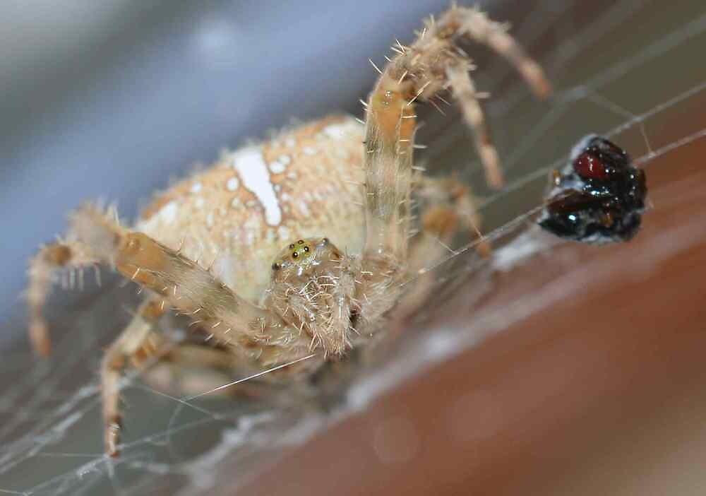 1/2 in Spider by gogoagogo