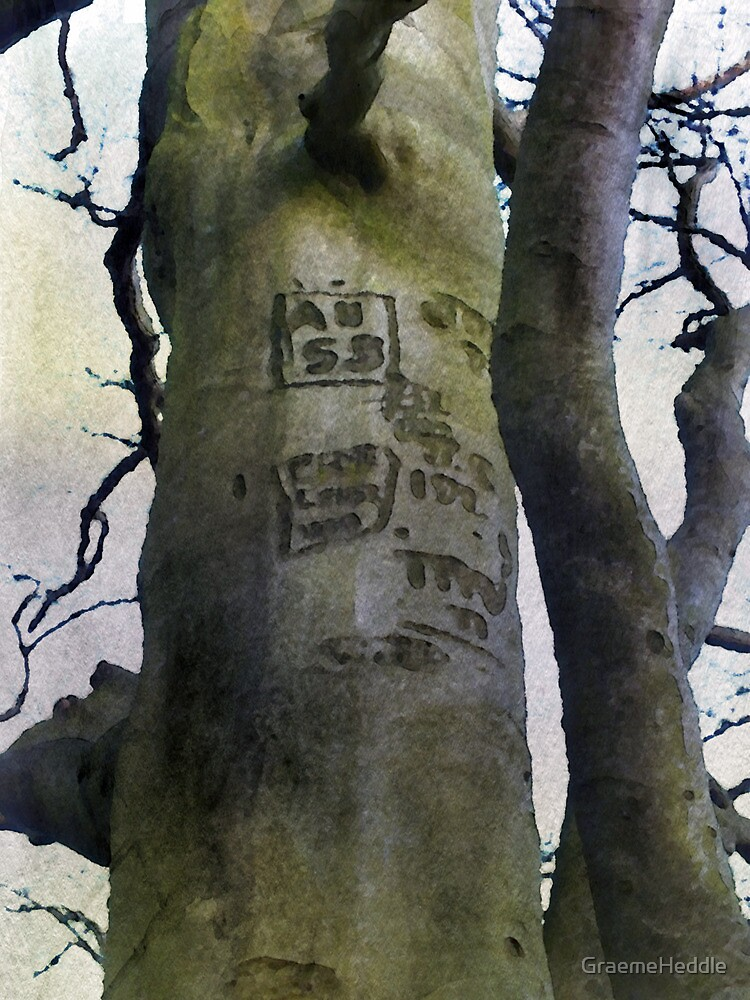 Scarred Bark by GraemeHeddle