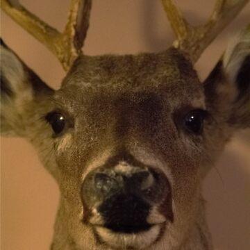 Buck Bust  by Woodsmen