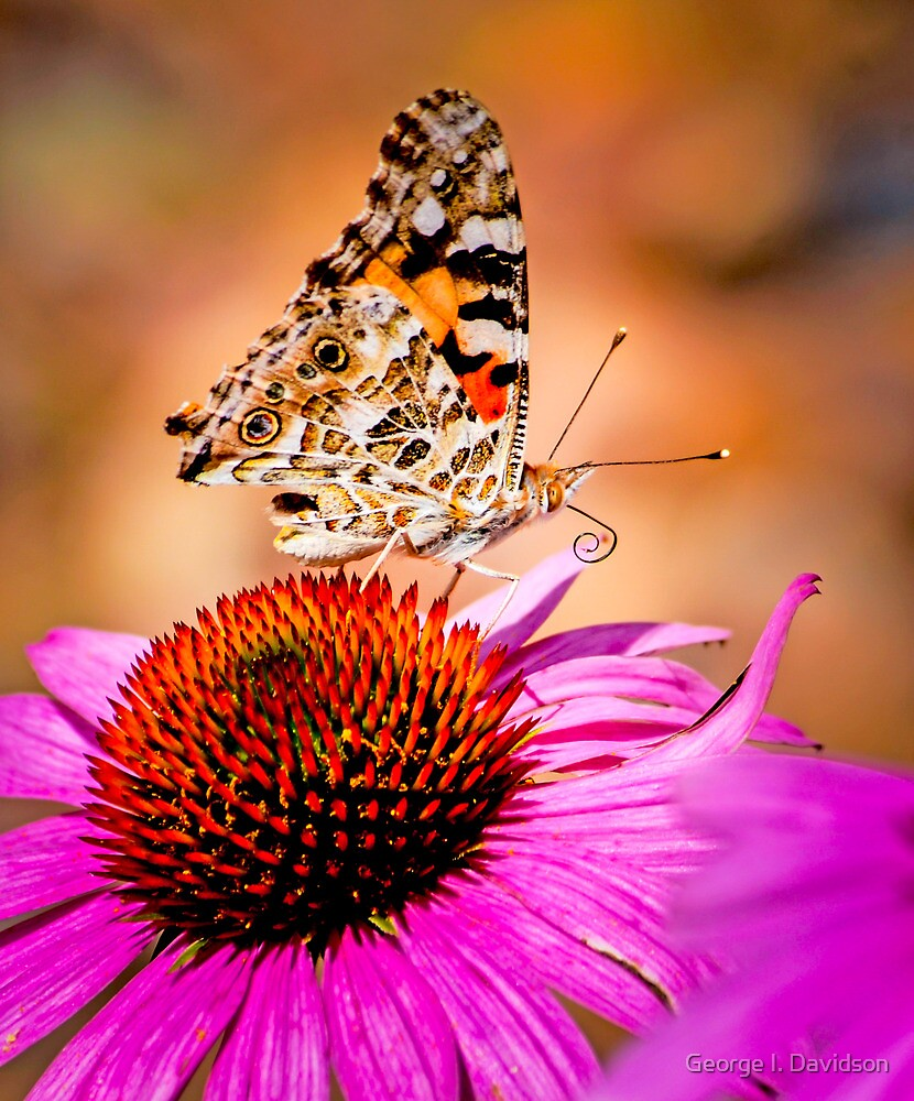 Summer and Butterflies by George I. Davidson