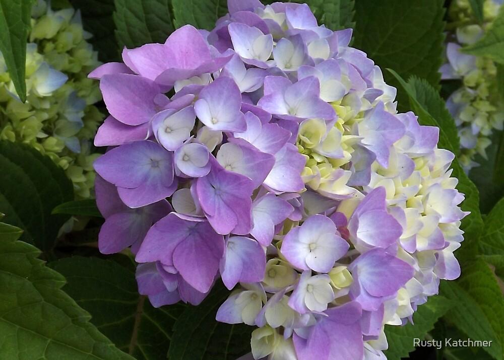 Lavender Hydrangea by Rusty Katchmer