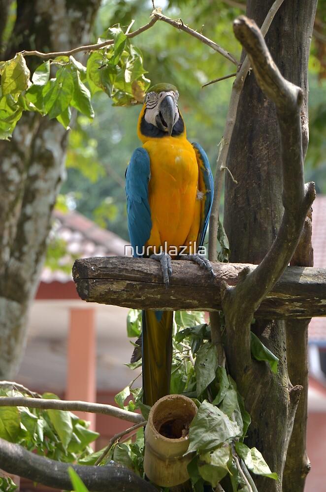 Blue and Gold Macaw by nurulazila