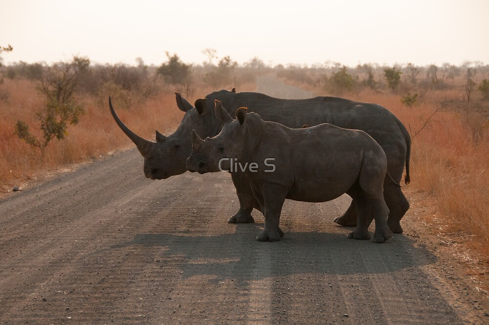 Rhino Mom & Baby by Clive S