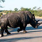 Muddy Rhino by Clive S